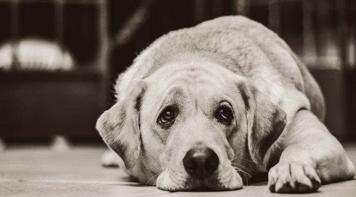 The Dangerous Effects of Essential Oils and Your Pets