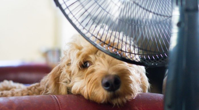 5 Ways to Help Your Pet Beat the Summer Heat
