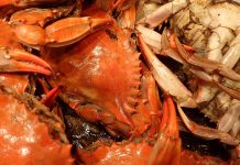 Get Crabby on St. Pete Beach