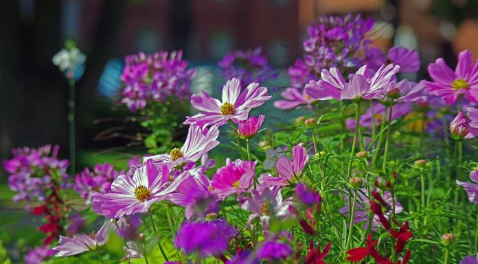 Your Basic Guide to Summer Gardening
