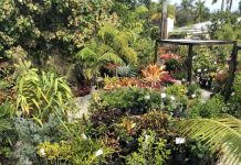 Using Florida Native Plants to Garden Through Summer
