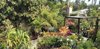 Using Florida Native Plants to Garden Through Summer