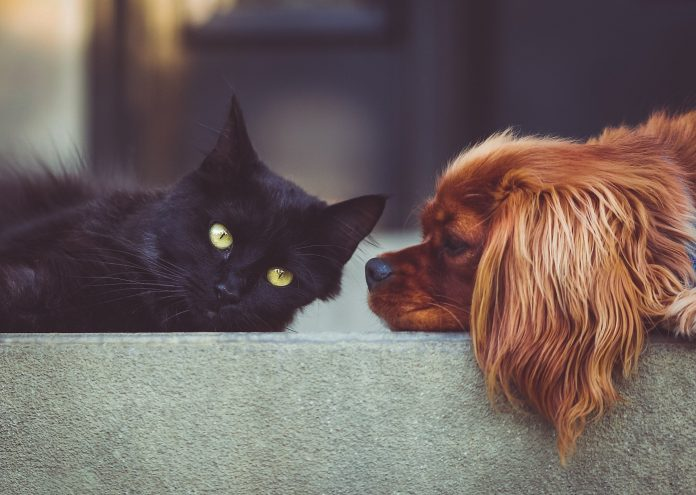 Your Happiest, Healthiest Pet