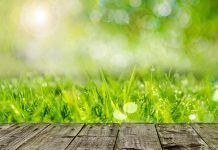 How to Care for Your Lawn in Summer