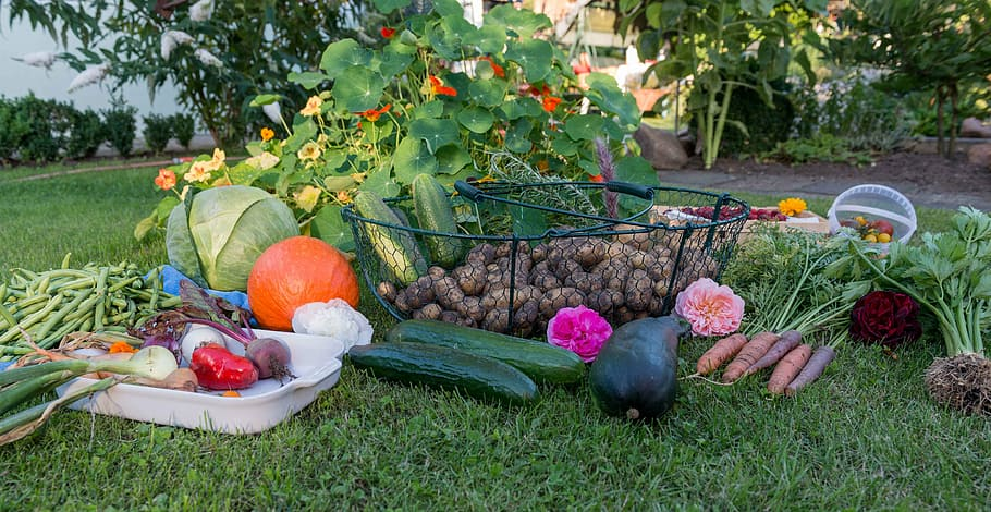 Keep your own vegetable garden for easy access to water and nutrient-rich veggies all season long.