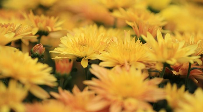 The Best Flowers to Keep Your Garden Healthy