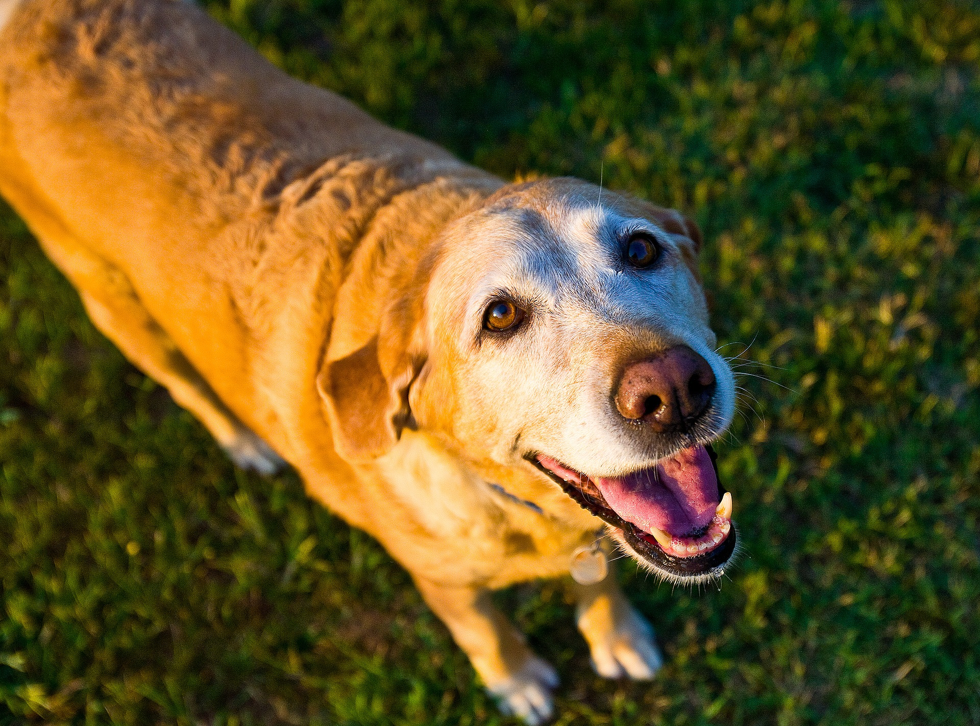 5 Tips to Keep Your Older Dog Healthy and Content