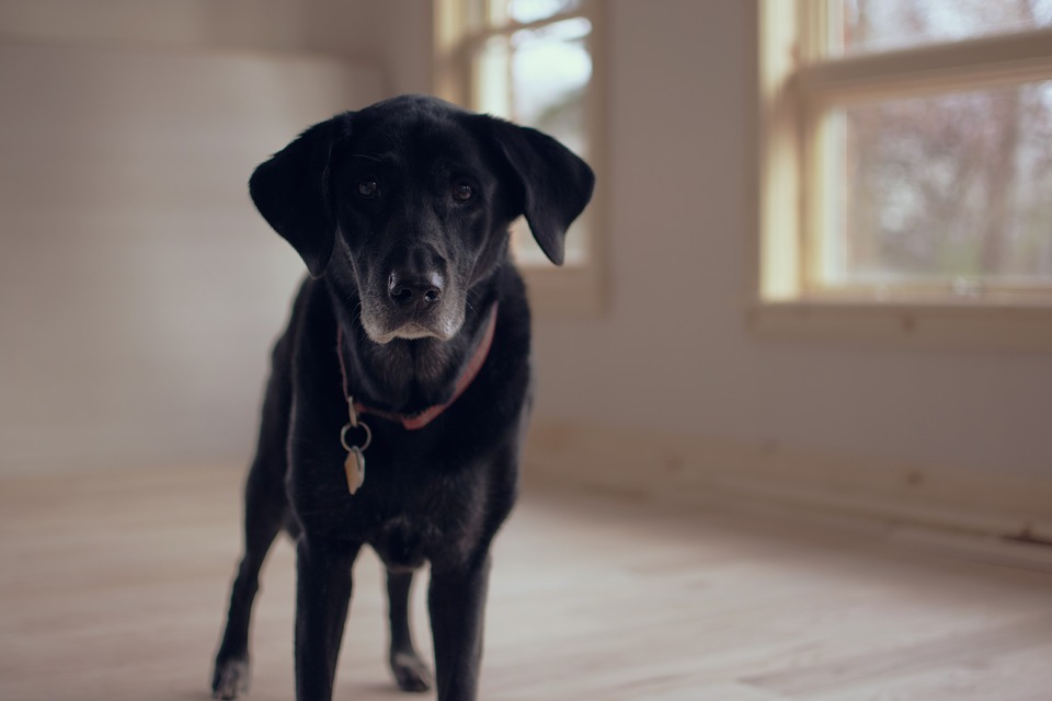 Feeding your senior dog a quality dog food can help keep them healthy from the inside out.