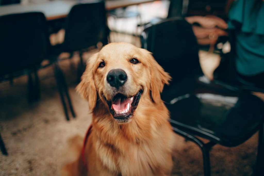 Is there anything better than a smiling furry face? Be sure to learn the difference between a happy smile and when a dog is baring their teeth.