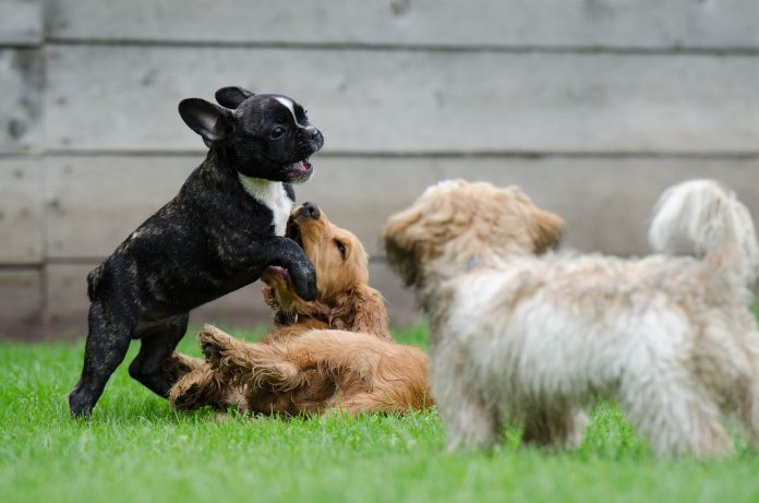 A Guide To Understanding Dog Body Language