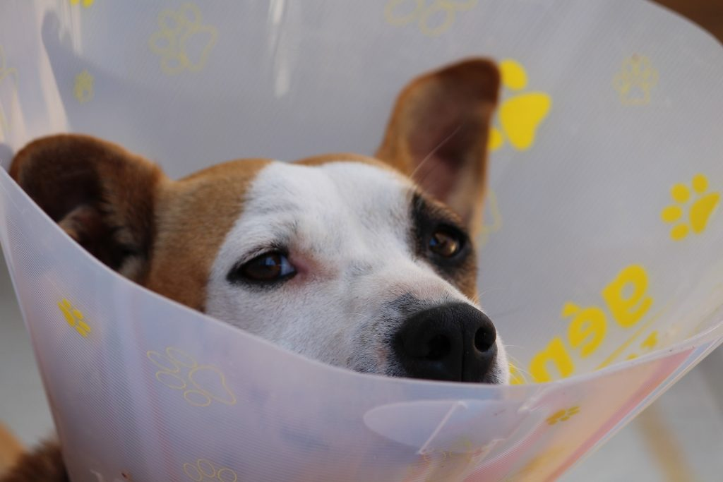 No one likes going to the doctor, but keeping up with regular veterinary visits each fall could save Fido's life.