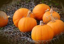 Recipe: Easy Pumpkin Dessert Dip