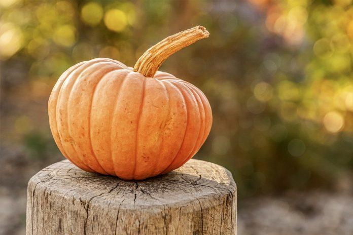 4 Halloween Activities and Treats to Celebrate