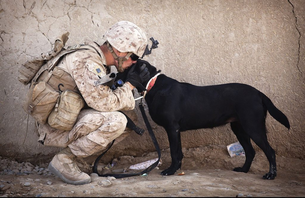 In many cases, a veteran's best bet for treating PTSD is through a service dog.