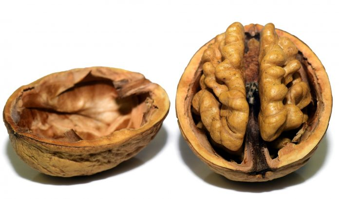 5 Food Groups to Slow Brain Aging