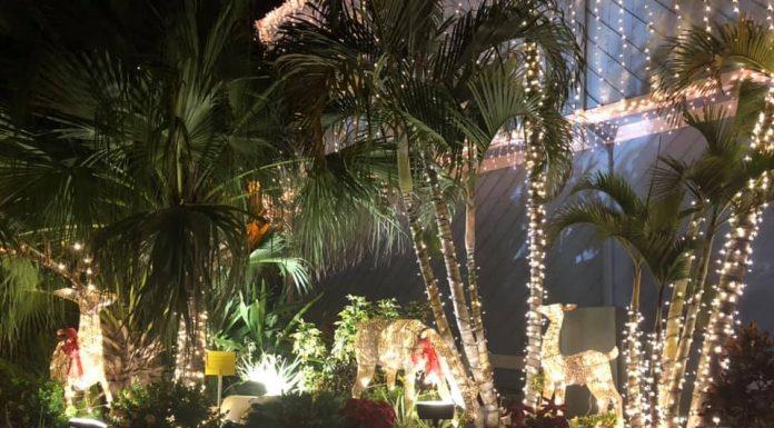 Festival of Lights at the Fishermen's Village