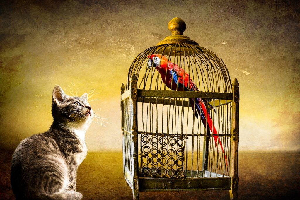 Cats and birds don't mix... but having them each as pets makes things interesting!