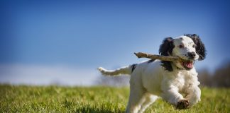 10 Mood-Boosting Ideas You Can Try to Help Cure Pet Anxiety