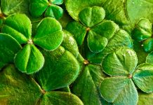 St. Patrick's Day: Grab your green garb and go