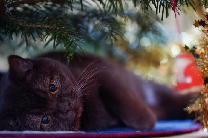 7 Perfect Gift Ideas for Pets and Pet Owners