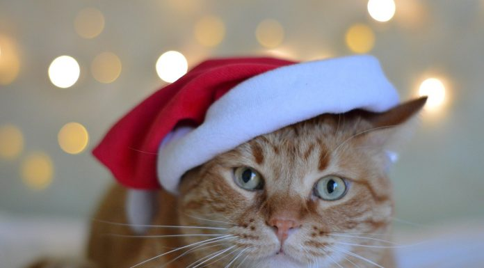 How to Keep Your Pets Safe During the Holiday Season