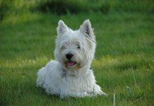Shelter Pet Adoption Day: Best Dog Breeds for Seniors