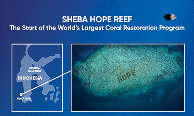 Restoring Coral Reefs Around the World