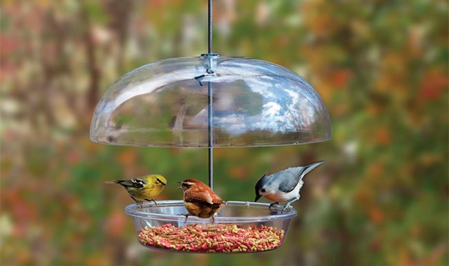 Attract More Birds to Your Backyard
