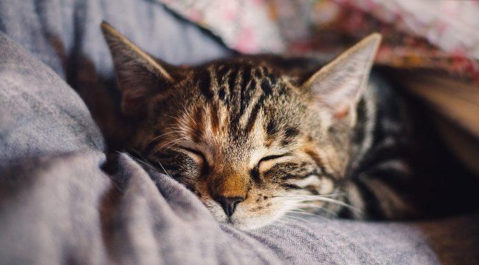 July Cutest Pet Contest