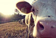 3 Surprising Ways Dairy Farmers Focus on Sustainability