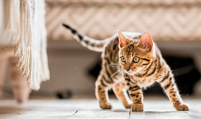 5 Ways to Give Your Cat a Purr-fect Life