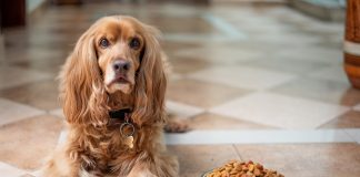 Top 5 Things to Look for When Buying Dog Food